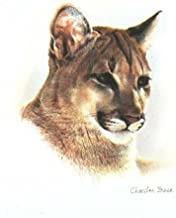 Charles Frace - Young Cougar Open Edition on Paper