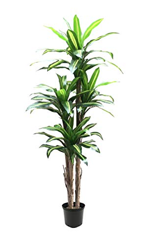 AMERIQUE Gorgeous 6' Tropical Dracaena Artificial Tree Silk Plant with UV Protection, Nursery Plastic Pot, Feel Real Technology, Super Quality, Green/Yellow