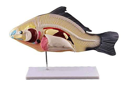 Modelo 3D de disección de Peces, Laboratorio de 3 Partes, M