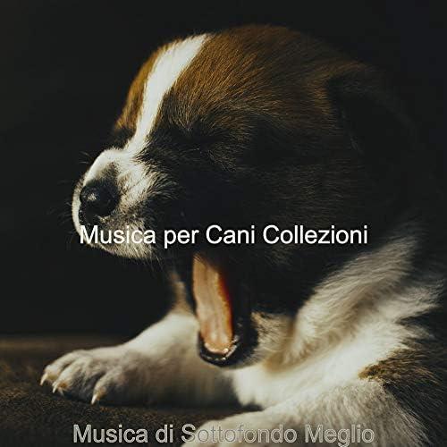 Musica per Cani Collezioni