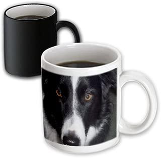 3dRose mug_50182_3 Border Collie Macro Magic Transforming Mug, 11-Ounce
