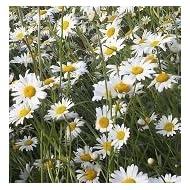 Just Seed British Wild Flower