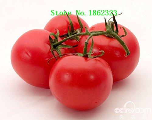 Hot! 100 pièces 16 couleurs tomate Graines New Garden Flowers Four Season Semis Monde Graines de fleurs rares pour le jardin