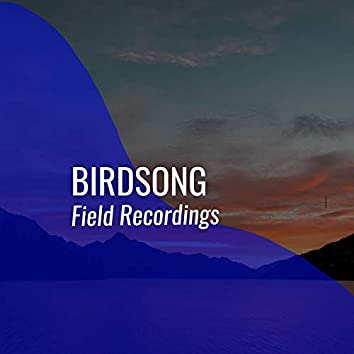 Relaxing Tranquil Birdsong Field Recordings