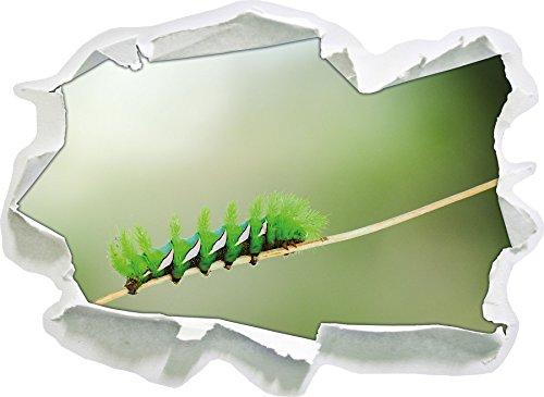 Chenille Verte Rare, Papier 3D Sticker Mural Taille: 62x45 cm décoration Murale 3D Stickers muraux Stickers