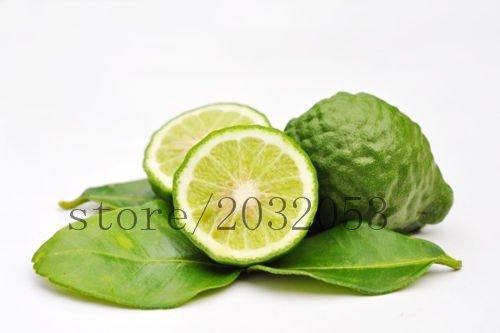 PRODUITS HOO - 20 graines de citron fruits Combava Leech LIME GRAINES Balcon Patio Les arbres fruitiers plantés en pot graines de variétés anciennes Vente chaude!