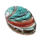 Conchas de abulón hechas a mano de bricolaje con múltiples orificios, concha natural, acuario, pecera, pintura de paisaje, habitación, boda, decoración del hogar, accesorios de fotografía, artesanía