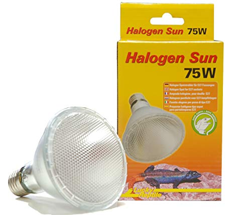 Lucky Rep Halogen Sun