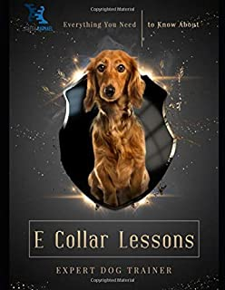 Everything You Need to Know About E Collar Lessons