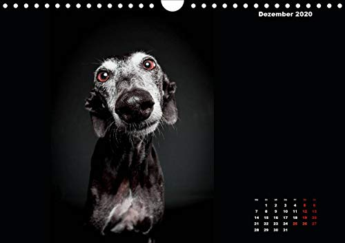 『Gier, M: Stimme der Windhunde (Wandkalender 2020 DIN A4 quer』の13枚目の画像