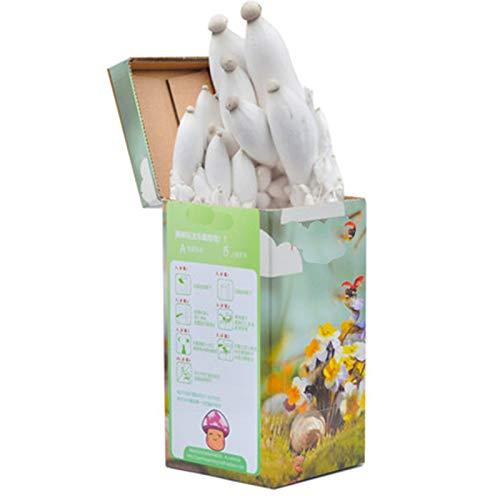 Rowe Cultive su Propio Kit de árboles de Bonsai, Semillas de champiñones orgánicos para Interiores esporas para Plantar Kits de Cultivo de Plantas, Caja de Hongos Familiar Cuenca Cuadrada (Color : A)