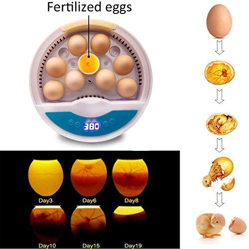 YXYOL 9 Huevos incubadora, Pequeño Incubadora automática Aves criadero Digital Huevo...