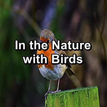 In the Nature with Birds