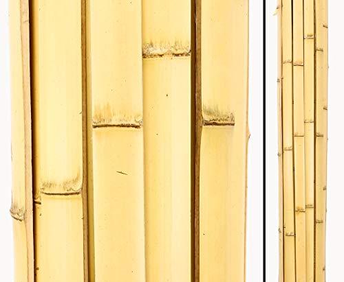 bambus-discount.com Bambusrohr Latten 200cm Moso gelb Gebleicht mit Breite 4 bis 4,2cm