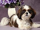 Cuadro de diamantes 5d redondo completo'perro flor animal' imagen de diamantes de imitación DIY bordado de diamantes decoración del hogar A11 40x50cm