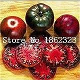 Pinkdose 100 teile/beutel Rainbow Tomato Bonsai, seltene Tomatenpflanze, Bonsai Bio-Gemüse & amp; Obstbonsai, Topfpflanze für Haus & Garten: 16
