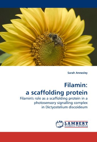 Filamin: a scaffolding protein: Filamin's role as a scaffolding protein in a photosensory signalling complex in Dictyostelium discoideum