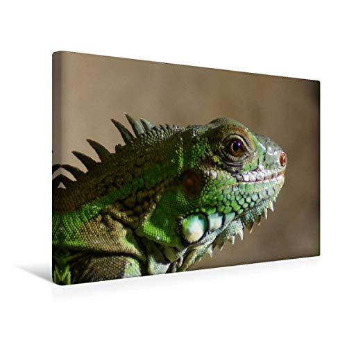 CALVENDO Premium Textil-Leinwand 45 x 30 cm Quer-Format Grüner Leguan Portrait, Leinwanddruck von Kattobello
