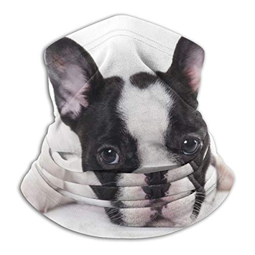 Sweet Pet Cute Black White French Bulldog Puppy Face Mask Bandanas For Dust, Outdoors, Festivals, Sports