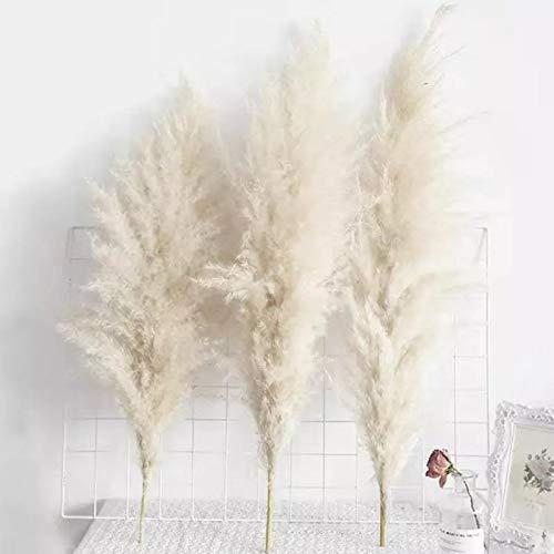 JMBF Pampas Grass Sala de Estar Muebles para El Hogar de Pie Decoración Rosa Caña Grande Flor Seca Diseño de Ventana...
