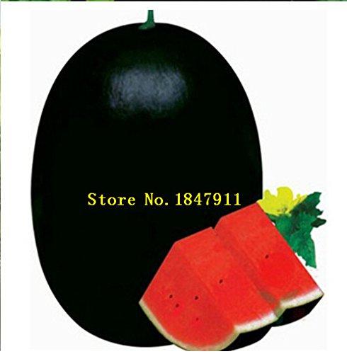 Multicolore: Big Sale original Paquet 30 graines/Paquet, fruits Graines de melon d'eau Pot, Beauté noire pastèque, des semences de pastèque