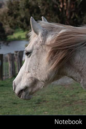 Notebook: Pferd, Pony, Australisches Pony, Tier Notizbuch / persönliches Tagebuch / Schreibheft / Logbuch / Planer / Vokabelheft / Notizen - 6 x 9 ... Seiten mit Datumslinie, glänzendes Cover.
