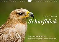 Scharfblick (Wandkalender 2021 DIN A4 quer): Schoene Portraits von Raubadler, Wuestenbussard und Schreiseeadler (Monatskalender, 14 Seiten )