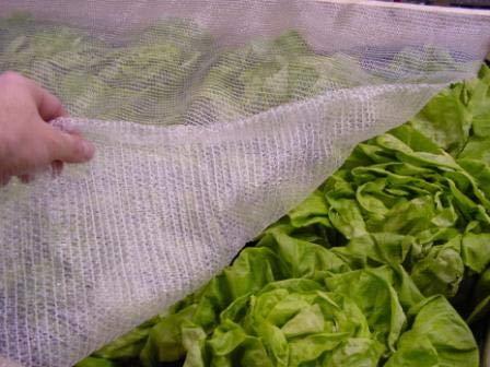 Agralan Envirotect – Heavy Duty de Protection Contre Le Gel de Jardin en Polaire Alternative Tissu tissé – Divers 4m x 5m