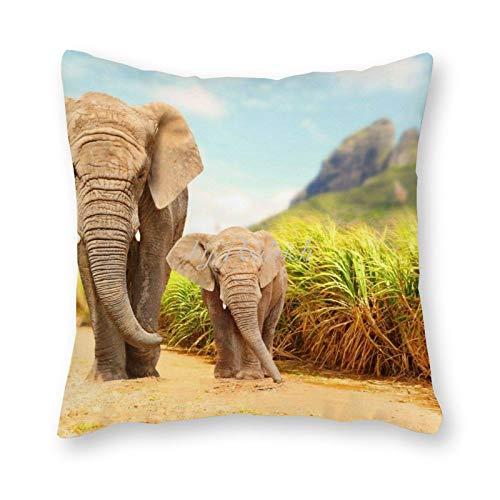 Viowr22iso Fundas de almohada decorativas de 22 x 22, madre y bebé elefante salvaje África linda funda de cojín para decoración del hogar para sofá cama silla