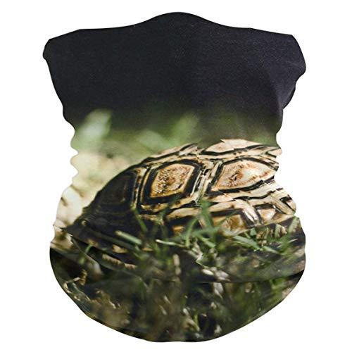 Sdltkhy Best Turtles Stirnband Damen Bandana Herren Sturmhaube, Halswärmer, Gesicht, Helm Liner Gesicht