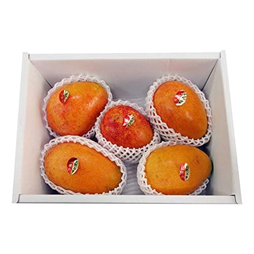沖縄県産 アップルマンゴー 家庭用 約2kg