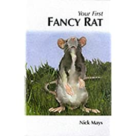 Your First Fancy Rat