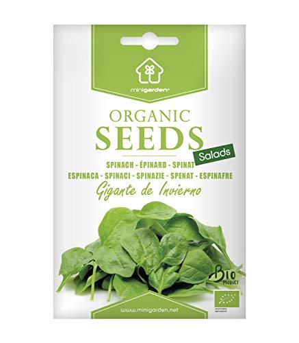 Riesen-Winterspinat, zertifizierte biologische Samen von Minigarden, enthält ungefähr 800 Samen