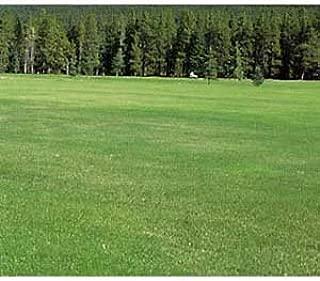 芝の種:ケンタッキーブルーグラス サドンインパクト2kg [極濃緑色で美しい西洋芝 140平米分]