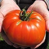 La herencia del monstruo gigante tomate originales de semillas frescas, Paquete Profesional, 100 semillas / paquete, verduras muy raro TS177