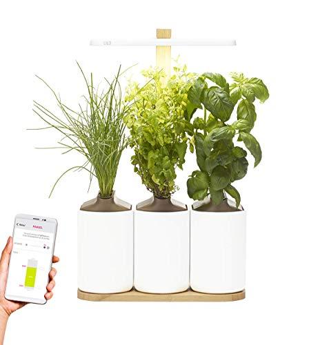 Lilo, Ihr smarter Indoor-Garten ❃ Die vernetzbare Version ❃ Bauen Sie ganz einfach Ihre eigenen frischen Kräuter an, das ganze Jahr über ❃ Inklusive Basilikum, Minze und Schnittlauch