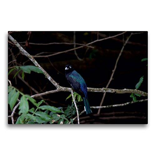 CALVENDO Premium Textil-Leinwand 75 x 50 cm Quer-Format Schwarzkopftrogon aus dem Vogelparadies Costa Rica, Leinwanddruck von Walter Imhof