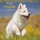 Hunde 2021 - Wand-Kalender - Broschüren-Kalender - A&I - 30x30 - 30x60 geöffnet: Dogs