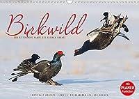 Emotionale Momente: Birkwild (Wandkalender 2022 DIN A3 quer): Die Balz des kleinen Hahnes - atemberaubende Bilder der kleinen schwarzen Ritter. (Geburtstagskalender, 14 Seiten )