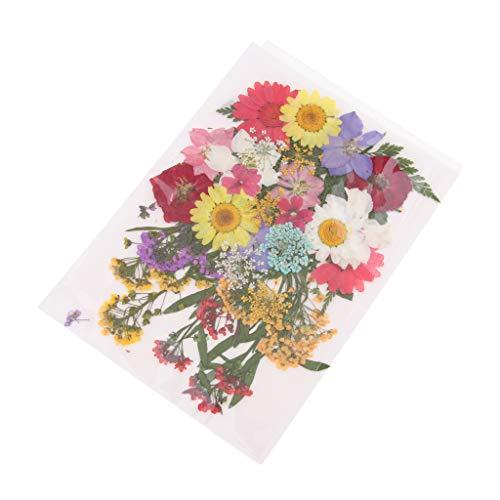 dailymall 6 Styles Real Dry Press Fleur Naturel Pressé Sécher Fleurs Feuilles pour Ongles Art Artisanat Main Savon Bougie Résine Bijoux Fabrication De Matériaux - F