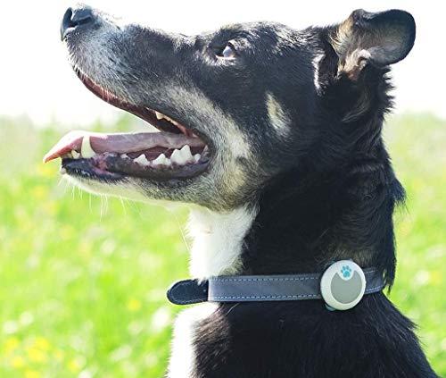 Sure Petcare iBM001 Animo - Verhaltens- & Aktivitätsmonitor für Hunde, grau