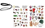 National Geographic Snorkeler - Guide to Marine Invertebrates of Florida and The Caribbean - Creature/Fish ID Card (6 in by 9 in) Bundle with Lanyard