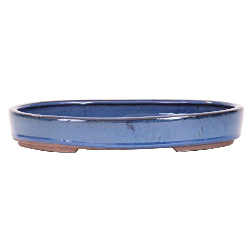 Bonsaï – Coque, forêt Bol ovale 25 x 18 x 4 cm bleu 51008