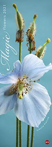 Magic Flowers Vertikalkalender - Kalender 2021 - Heye-Verlag - Sibylle Pietrek - Wandkalender mit zarten Blütenmotiven - 24,5 cm x 69 cm