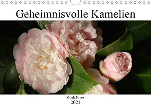 Geheimnisvolle Kamelien (Wandkalender 2021 DIN A4 quer)