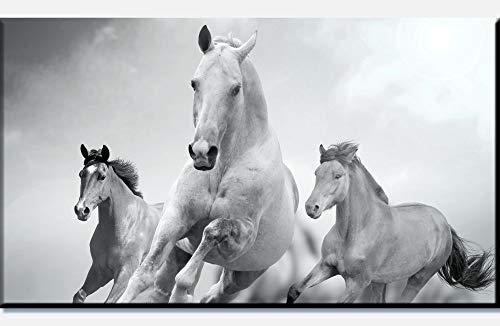 wandmotiv24 Leinwandbild Pferde Laufen in Weiß und Schwarz 90x50cm (BxH) Panoramabild Foto-Leinwand Wandbild Foto-Geschenke M0945