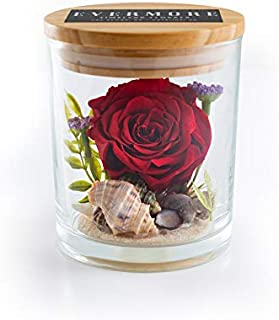 The Evermore Preserved Rose Keepsake Gift Jar - Wife Girlfriend Gift -Anniversary- Real Forever Rose - Eternal Rose - Womens Birthday - (Red - Rosa Playa)