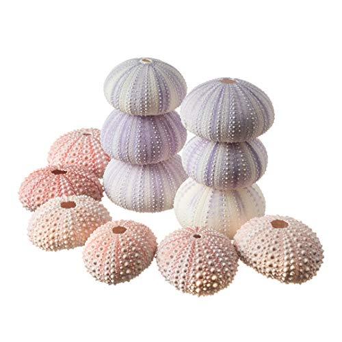 Sea Urchins | 6 Pink Sea Urchin Shells & 6 Purple Sea Urchin Shells | Craft and Decor | Plus Free Nautical eBook by Joseph Rains