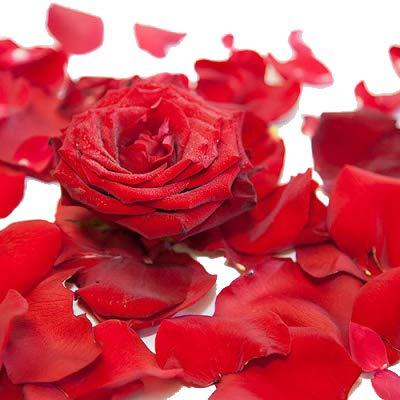 Echte Rosenblätter - Blätter von roten Rosen zum Streuen und zur Dekoration