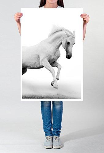Best for home Artprints - Dierenfotografie - Witte Arabische hengst bij mist fotodruk in haarscherpe kwaliteit LEINWANDBILD gespannt 90x60cm